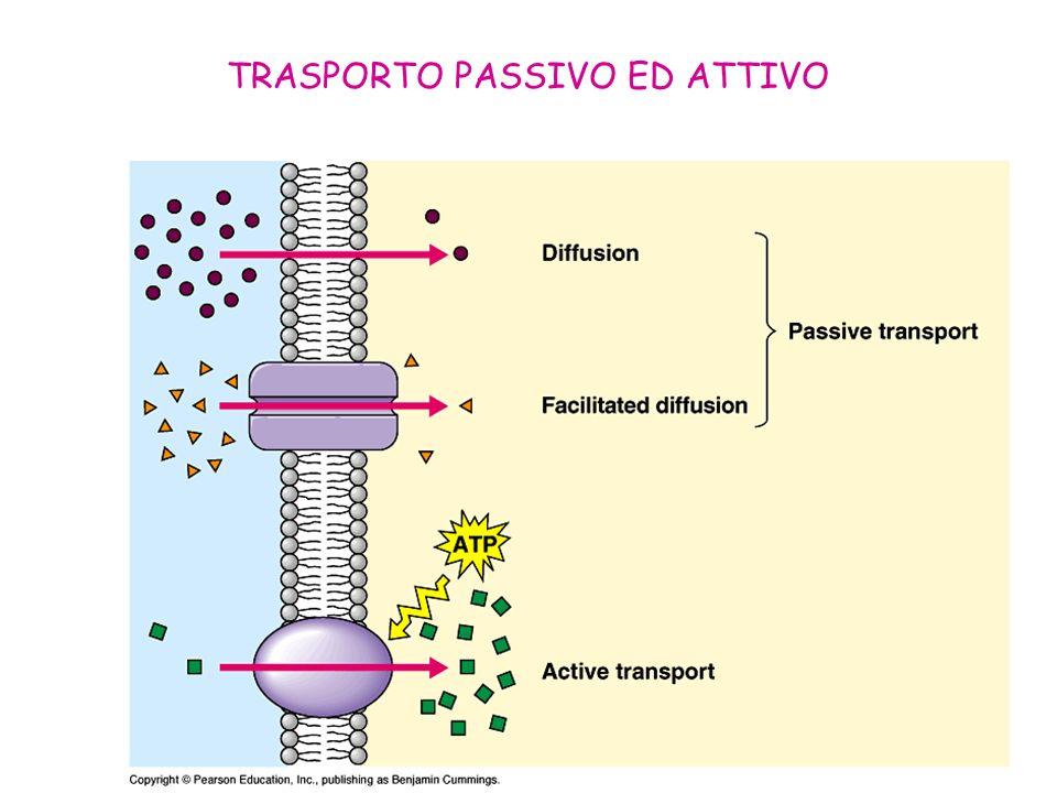 TRASPORTO PASSIVO ED ATTIVO