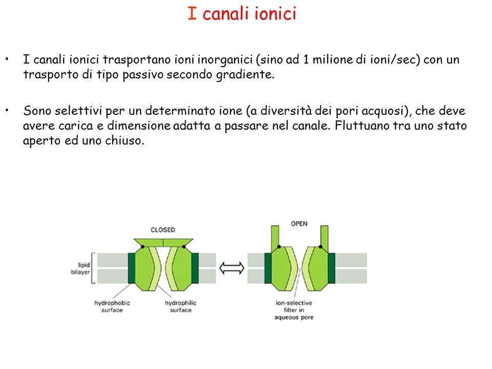 I canali ionici I canali ionici trasportano ioni inorganici (sino ad 1 milione di ioni/sec) con un trasporto di tipo passivo secondo gradiente.