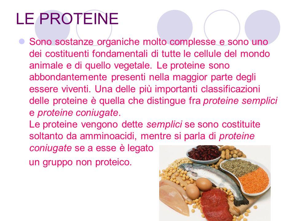 LE PROTEINE Sono sostanze organiche molto complesse e sono uno dei costituenti fondamentali di tutte le cellule del mondo animale e di quello vegetale.