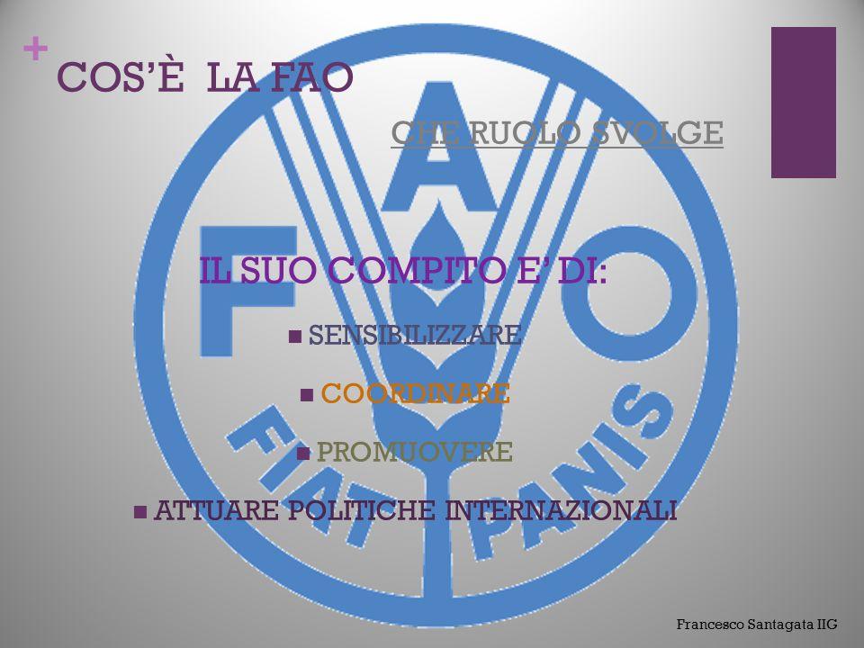 + COS' È LA FAO che ruolo svolge Francesco San. IIG