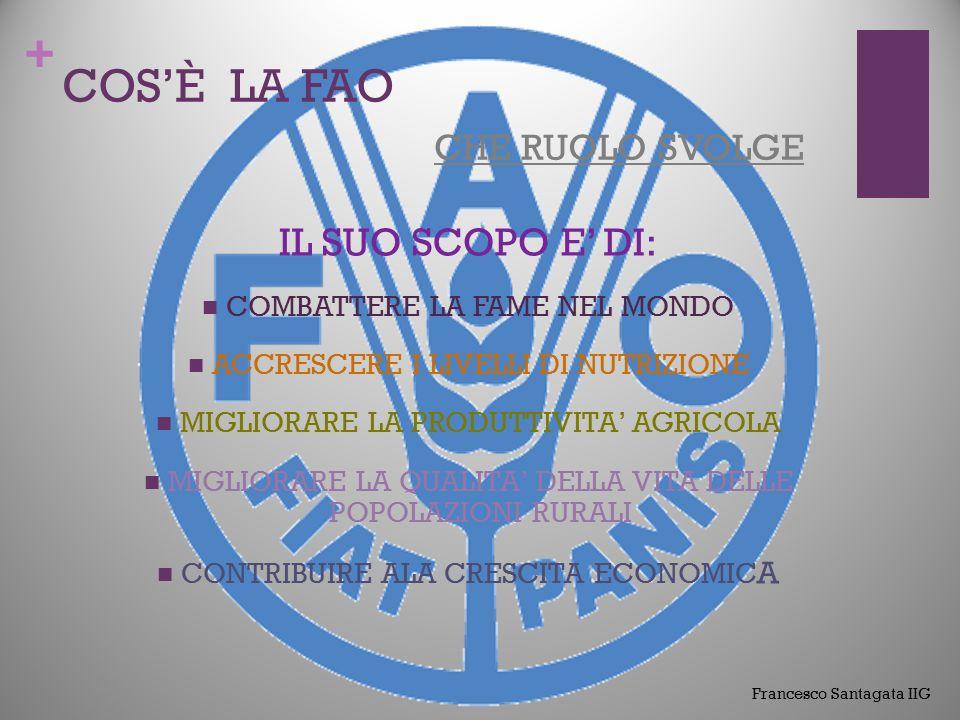 + COS'È LA FAO CHE RUOLO SVOLGE IL SUO COMPITO E' DI: SENSIBILIZZARE COORDINARE PROMUOVERE ATTUARE POLITICHE INTERNAZIONALI Francesco Santagata IIG
