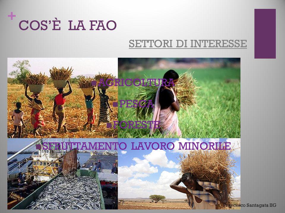 + COS'È LA FAO COME E' COMPOSTA DIPARTIMENTI: AGRICOLTURA E DIFESA DEL CONSUMATORE SVILUPPO ECONOMICO E SOCIALE GESTIONE RISORSE NATURALI E AMBIENTE PESCA E ACQUACOLTURA FORESTE COOPERAZIONE TECNICA CONOSCENZA E COMUNICAZIONE RISORSE UMANE FINANZIARIE E FISICHE Francesco Santagata IIG