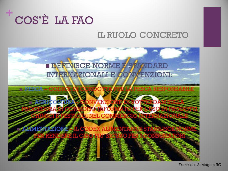 + COS'È LA FAO IL RUOLO CONCRETO FORNISCE UN FORUM NEUTRALE IN CUI I PAESI POSSONO, IN MODO PARITARIO, NEGOZIARE ACCORDI INTERNAZIONALE COORDINA GLI INTERVENTI E LE RISPOSTE A INFESTAZIONI O MALATIE TRANSFRONTALIERE DI PIANTE ED ANIMALI Francesco Santagata IIG