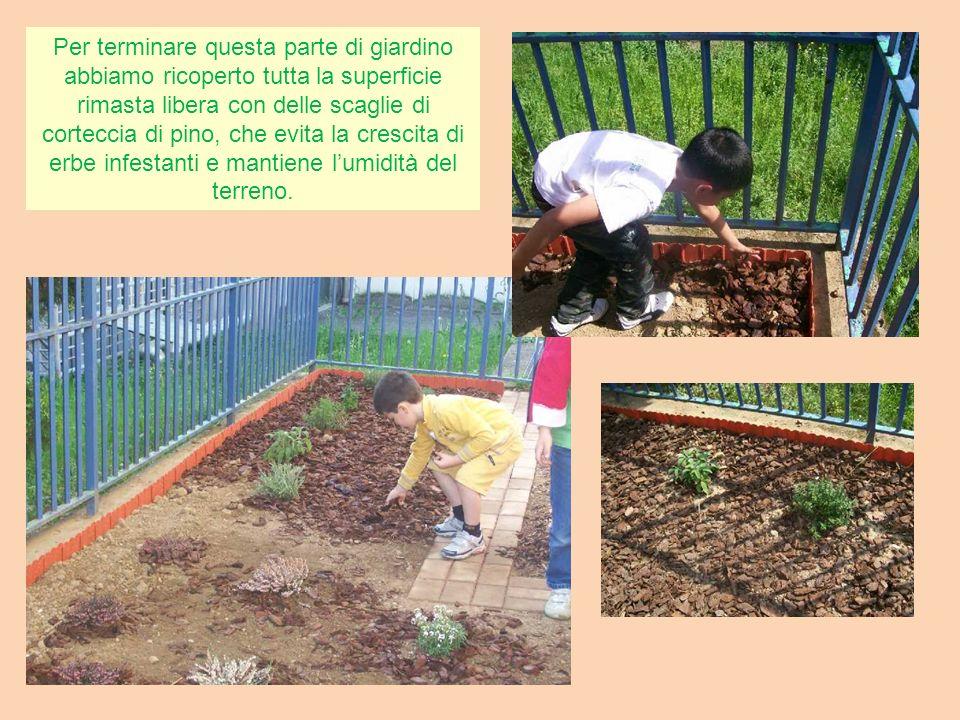 Per terminare questa parte di giardino abbiamo ricoperto tutta la superficie rimasta libera con delle scaglie di corteccia di pino, che evita la crescita di erbe infestanti e mantiene l'umidità del terreno.