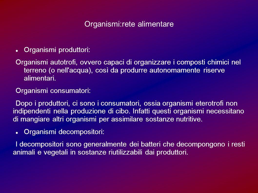 Organismi:rete alimentare Organismi produttori: Organismi autotrofi, ovvero capaci di organizzare i composti chimici nel terreno (o nell acqua), così da produrre autonomamente riserve alimentari.