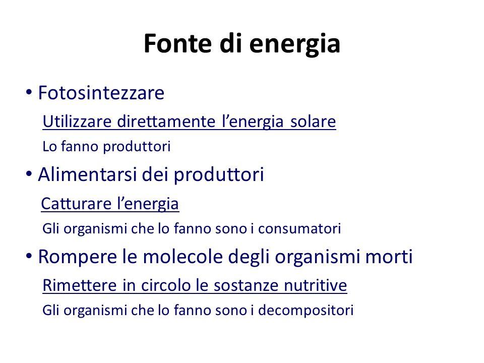 Fonte di energia Fotosintezzare Utilizzare direttamente l'energia solare Lo fanno produttori Alimentarsi dei produttori Catturare l'energia Gli organismi che lo fanno sono i consumatori Rompere le molecole degli organismi morti Rimettere in circolo le sostanze nutritive Gli organismi che lo fanno sono i decompositori