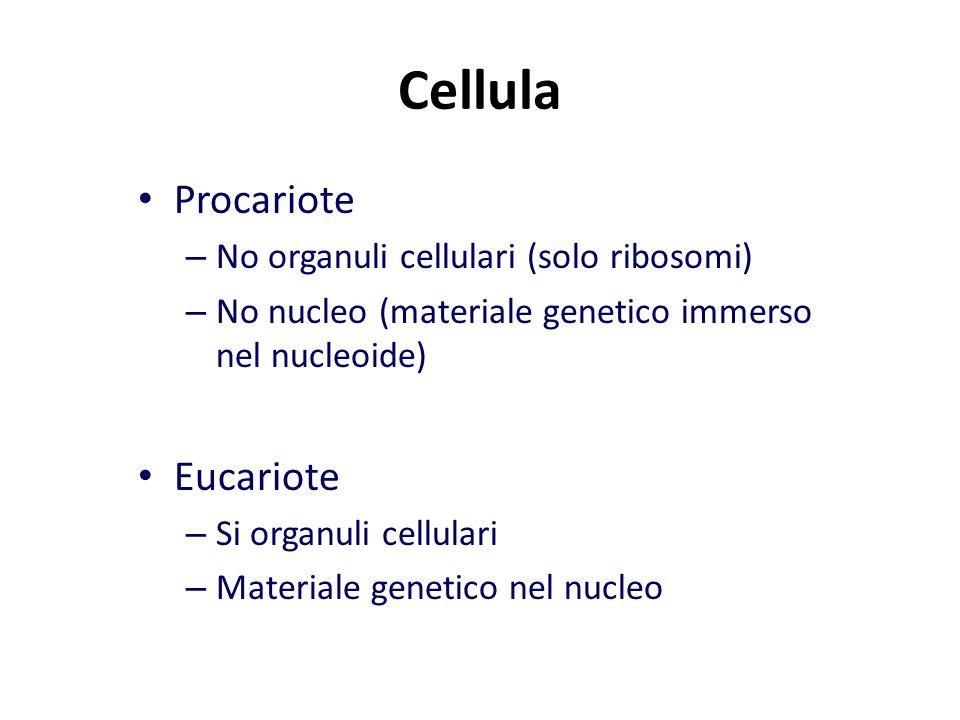 Cellula Procariote – No organuli cellulari (solo ribosomi) – No nucleo (materiale genetico immerso nel nucleoide) Eucariote – Si organuli cellulari – Materiale genetico nel nucleo