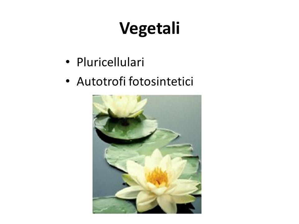 Vegetali Pluricellulari Autotrofi fotosintetici