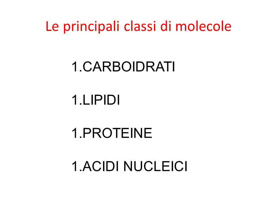 Le principali classi di molecole 1.CARBOIDRATI 1.LIPIDI 1.PROTEINE 1.ACIDI NUCLEICI