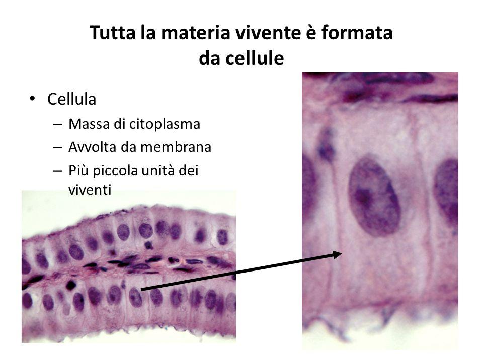 Tutta la materia vivente è formata da cellule Cellula – Massa di citoplasma – Avvolta da membrana – Più piccola unità dei viventi