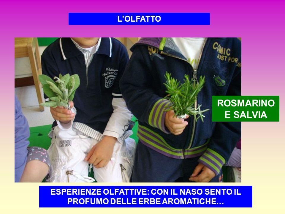 L'OLFATTO ROSMARINO E SALVIA ESPERIENZE OLFATTIVE: CON IL NASO SENTO IL PROFUMO DELLE ERBE AROMATICHE…