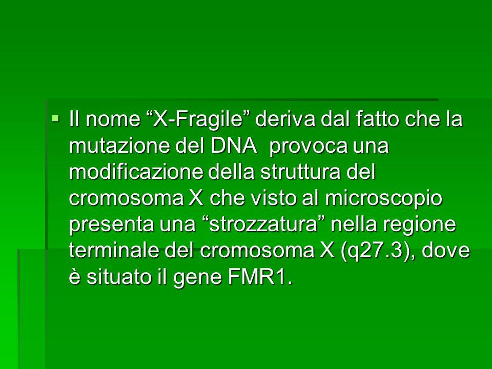  Il nome X-Fragile deriva dal fatto che la mutazione del DNA provoca una modificazione della struttura del cromosoma X che visto al microscopio presenta una strozzatura nella regione terminale del cromosoma X (q27.3), dove è situato il gene FMR1.