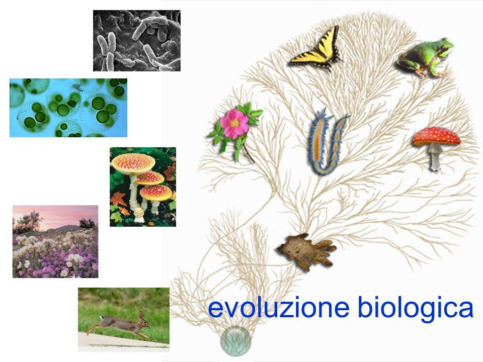evoluzione biologica