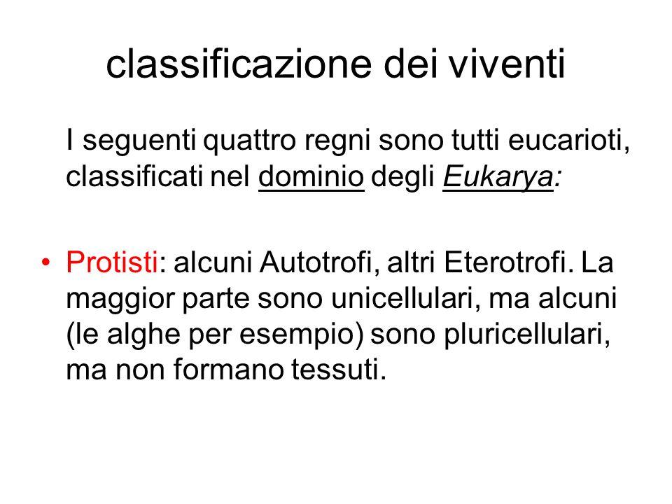 classificazione dei viventi I seguenti quattro regni sono tutti eucarioti, classificati nel dominio degli Eukarya: Protisti: alcuni Autotrofi, altri E