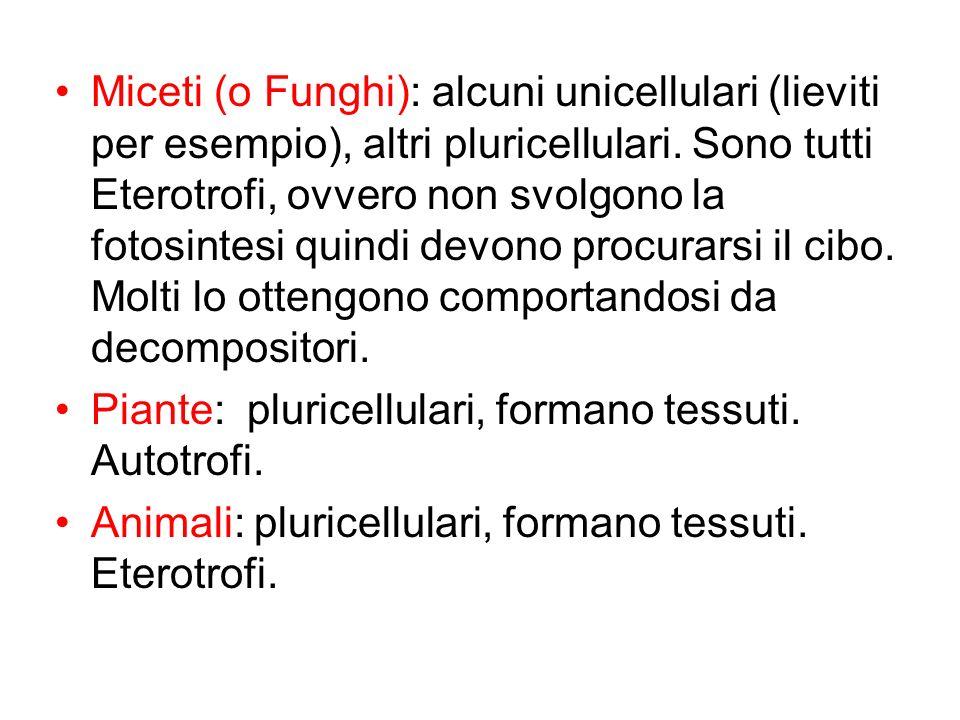 Miceti (o Funghi): alcuni unicellulari (lieviti per esempio), altri pluricellulari. Sono tutti Eterotrofi, ovvero non svolgono la fotosintesi quindi d