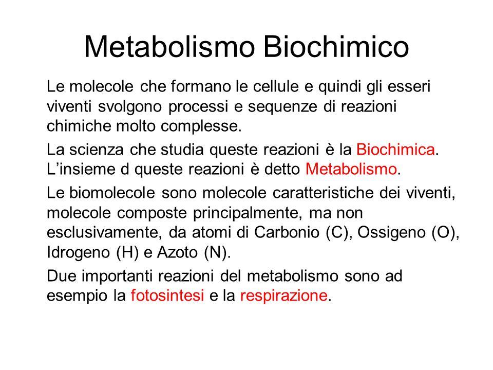 Metabolismo Biochimico La fotosintesi e la respirazione sono chimicamente l'una l'opposto dell'altra; nella fotosintesi si usa l'energia del sole per costruire le biomolecole da molecole semplici di acqua e anidride carbonica: Energia + 6 H 2 O + 6 CO 2  Glucosio (C 6 H 12 O 6 ) + 6 O 2 Invece la respirazione è l'esatto opposto, si demolisce una biomolecola per ottenere energia: Glucosio (C 6 H 12 O 6 ) + 6 O 2  Energia + 6 H 2 O + 6 CO 2