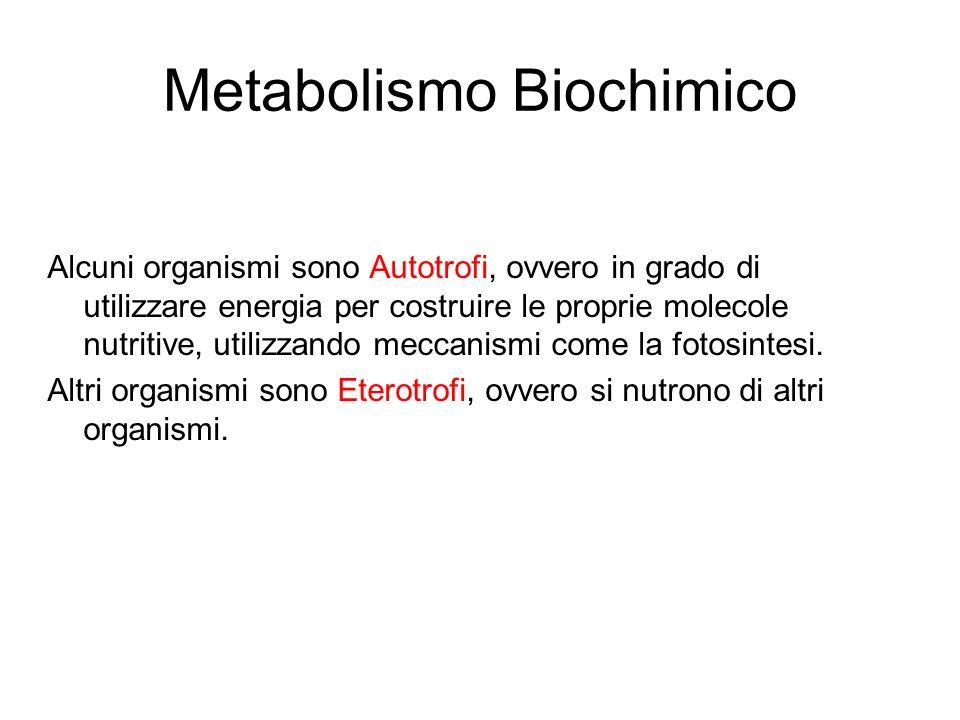 Metabolismo Biochimico Alcuni organismi sono Autotrofi, ovvero in grado di utilizzare energia per costruire le proprie molecole nutritive, utilizzando