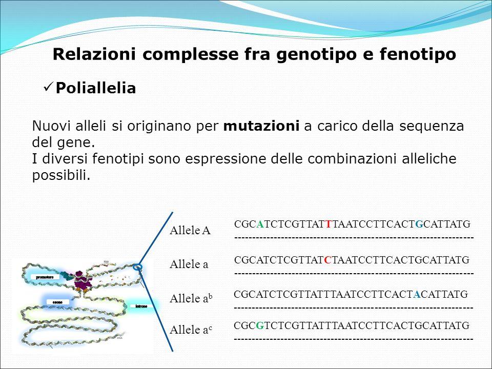 Poliallelia Relazioni complesse fra genotipo e fenotipo Nuovi alleli si originano per mutazioni a carico della sequenza del gene.