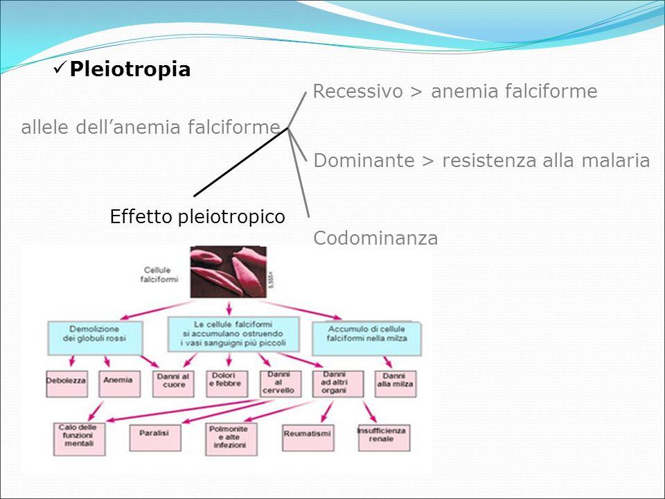 allele dell'anemia falciforme Recessivo > anemia falciforme Dominante > resistenza alla malaria Codominanza Effetto pleiotropico Pleiotropia