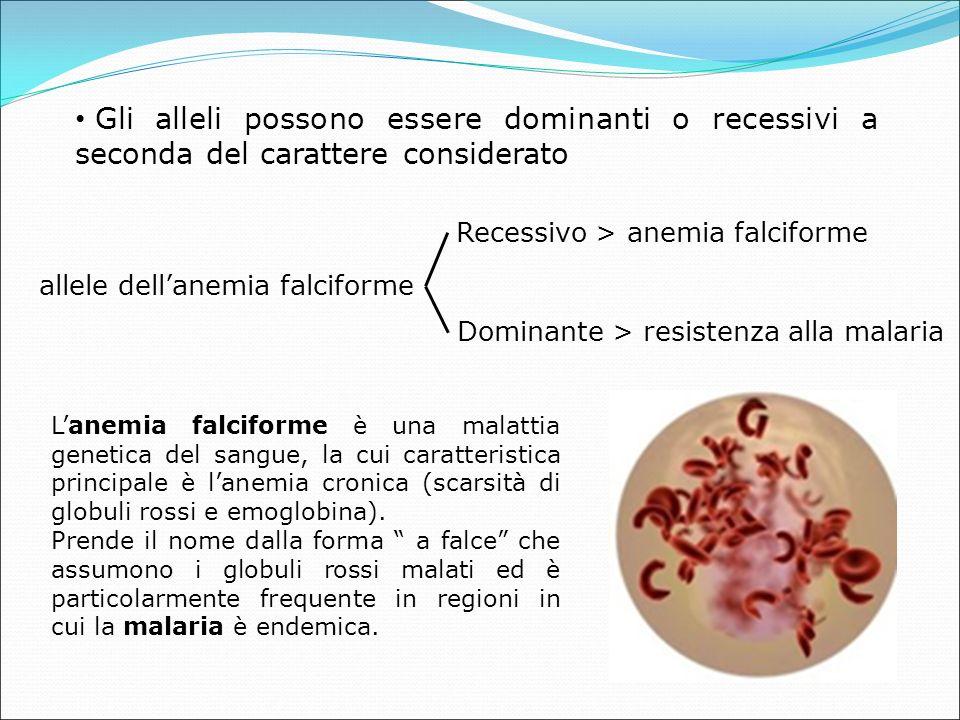Gli alleli possono essere dominanti o recessivi a seconda del carattere considerato allele dell'anemia falciforme Recessivo > anemia falciforme Dominante > resistenza alla malaria L'anemia falciforme è una malattia genetica del sangue, la cui caratteristica principale è l'anemia cronica (scarsità di globuli rossi e emoglobina).