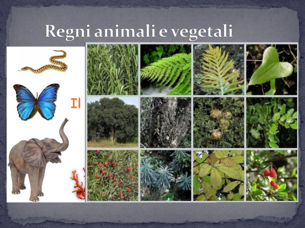 Sono organismi eucarioti pluricellulari Gli animali sono eterotrofi, i vegetali autotrofi Hanno cellule specializzati a formare tessuti
