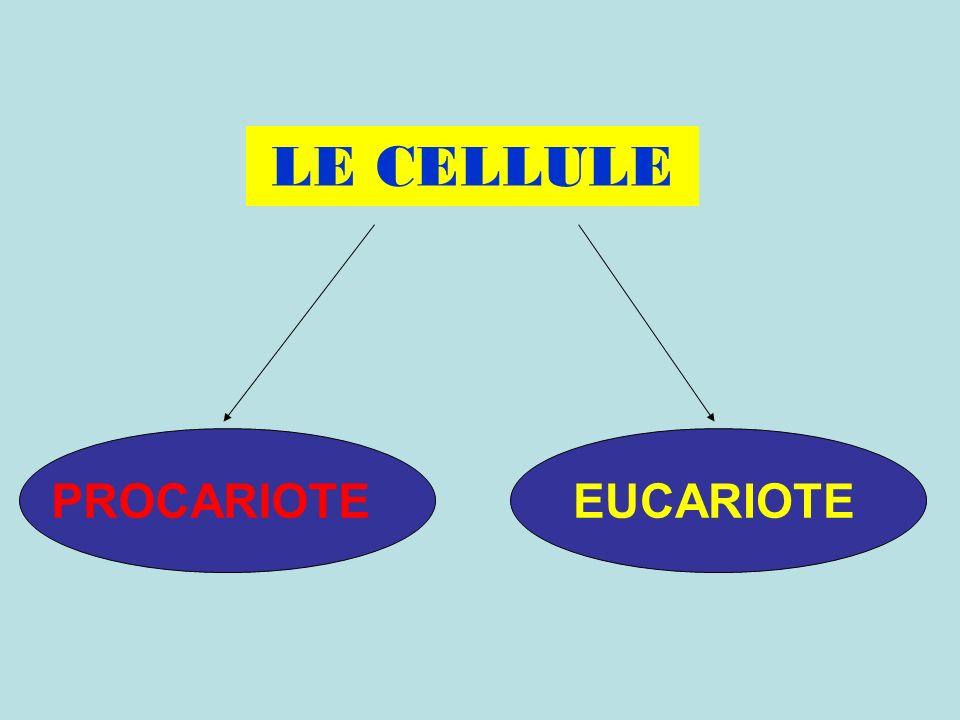 LE CELLULE PROCARIOTEEUCARIOTE