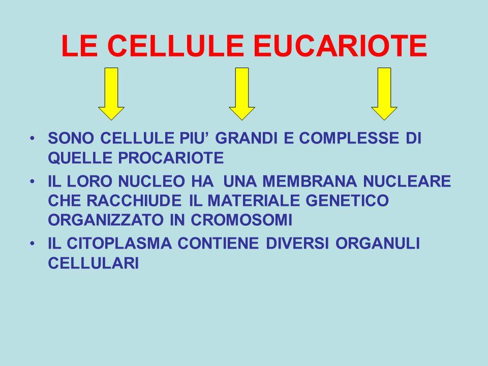 LE CELLULE EUCARIOTE SONO CELLULE PIU' GRANDI E COMPLESSE DI QUELLE PROCARIOTE IL LORO NUCLEO HA UNA MEMBRANA NUCLEARE CHE RACCHIUDE IL MATERIALE GENETICO ORGANIZZATO IN CROMOSOMI IL CITOPLASMA CONTIENE DIVERSI ORGANULI CELLULARI