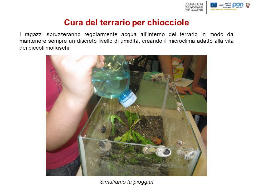 I ragazzi spruzzeranno regolarmente acqua all'interno del terrario in modo da mantenere sempre un discreto livello di umidità, creando il microclima adatto alla vita dei piccoli molluschi.