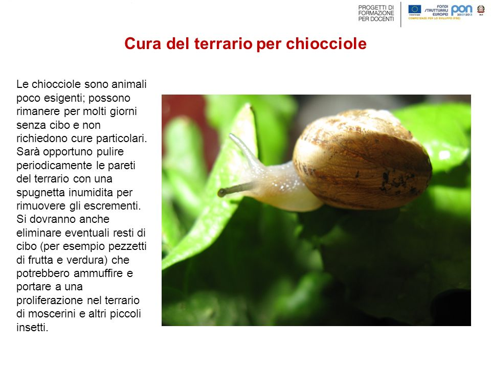 Le chiocciole sono animali poco esigenti; possono rimanere per molti giorni senza cibo e non richiedono cure particolari.