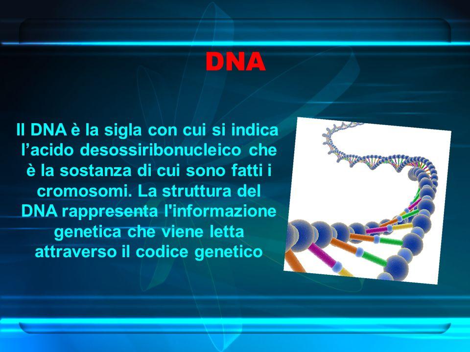 DNA Il DNA è la sigla con cui si indica l'acido desossiribonucleico che è la sostanza di cui sono fatti i cromosomi.