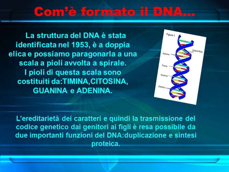 Com'è formato il DNA… La struttura del DNA è stata identificata nel 1953, è a doppia elica e possiamo paragonarla a una scala a pioli avvolta a spirale.