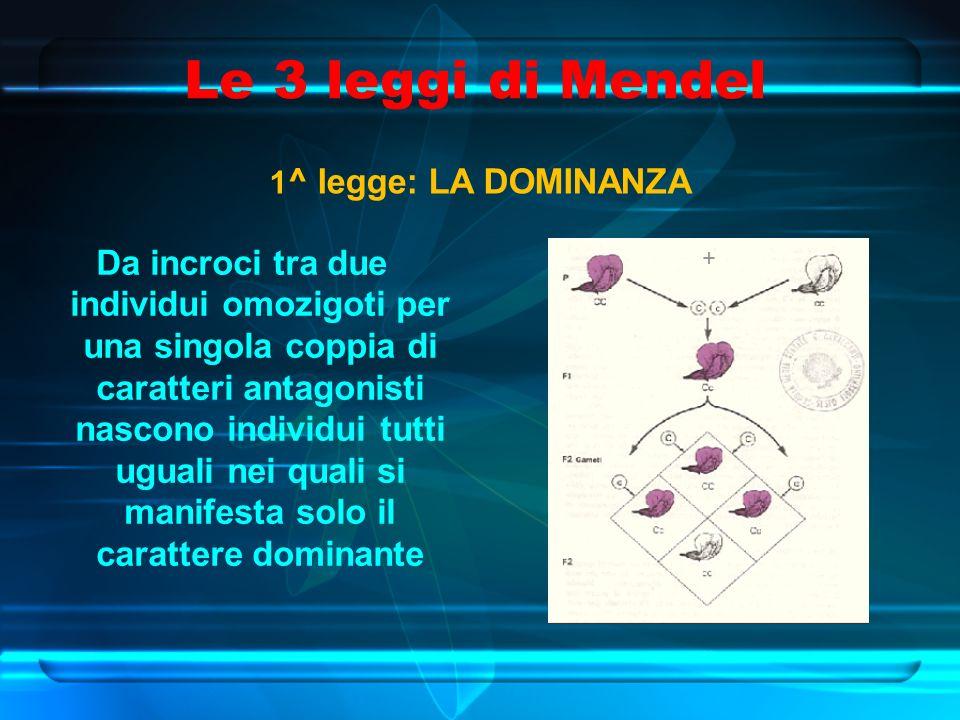 Le 3 leggi di Mendel 1 ^ legge: LA DOMINANZA Da incroci tra due individui omozigoti per una singola coppia di caratteri antagonisti nascono individui tutti uguali nei quali si manifesta solo il carattere dominante +
