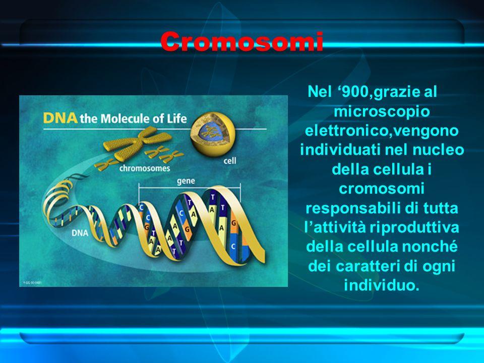 Cromosomi Nel '900,grazie al microscopio elettronico,vengono individuati nel nucleo della cellula i cromosomi responsabili di tutta l'attività riproduttiva della cellula nonché dei caratteri di ogni individuo.