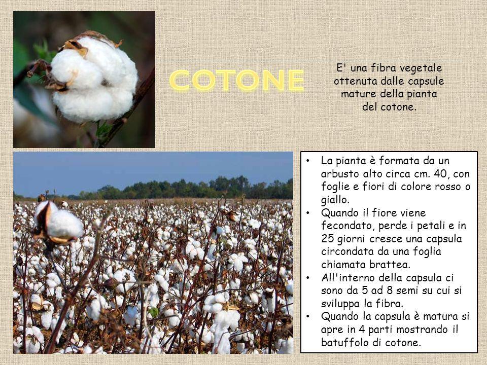 La iuta è altamente igroscopica, di colore bianco, giallognolo o bruno.
