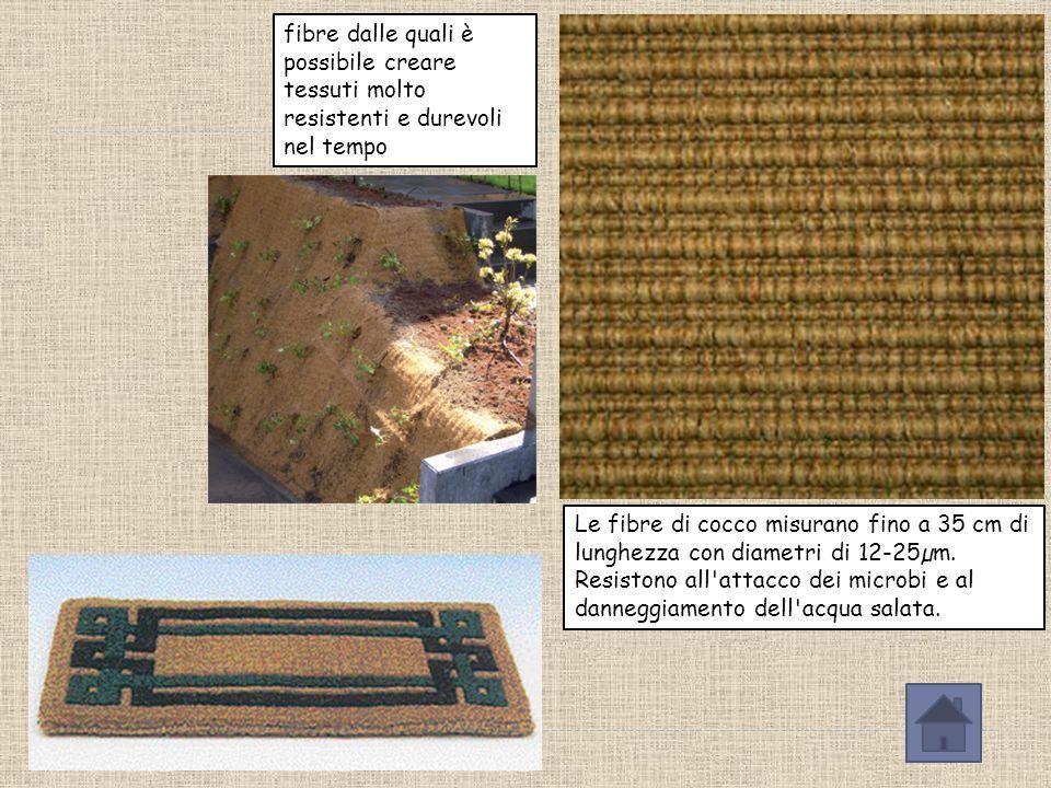 Dalle fibre del mesocarpo (guscio)si ricava il coir una fibra utilizzata per lavori di intreccio, tappeti e cordami.