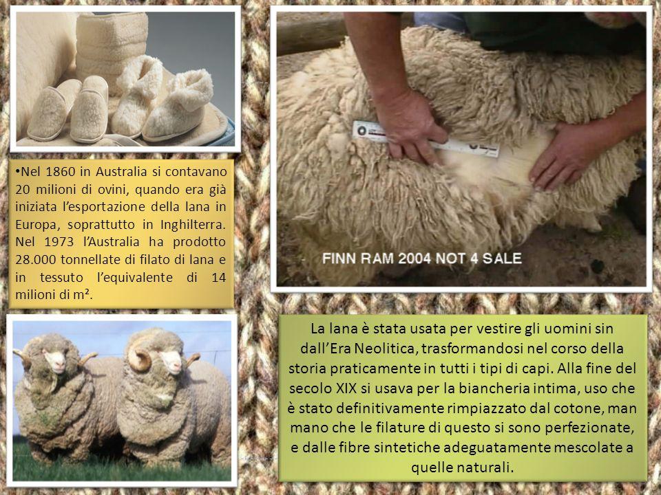 La maggior parte delle pecore produttrici di lana del continente europeo, di quelle esportate in Australia e Argentina nei secoli XV e XVIII, derivano
