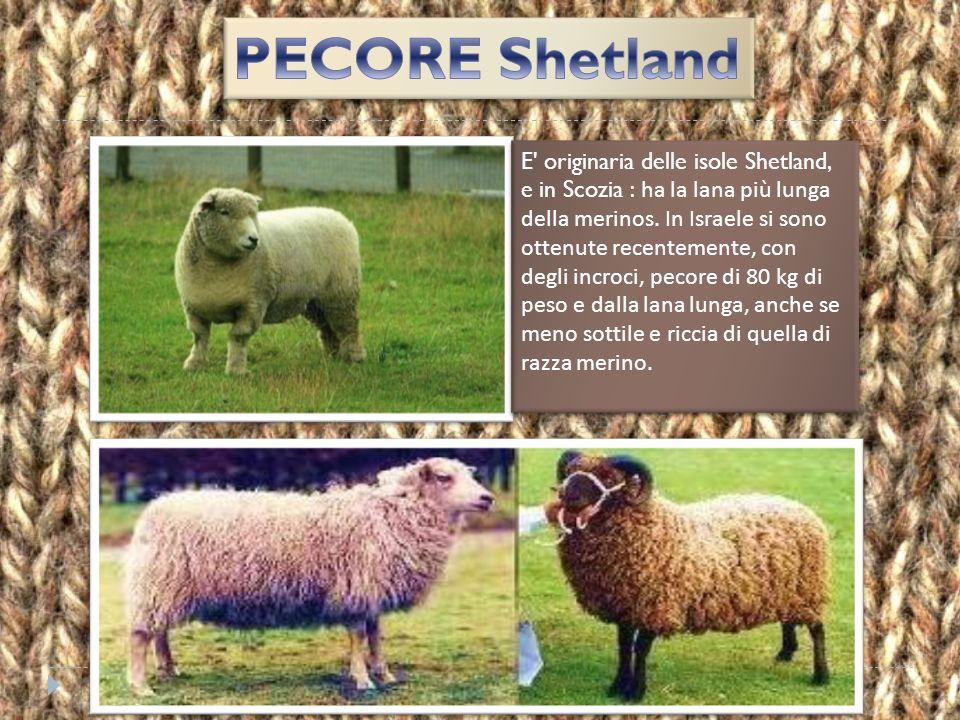 è una lana dall'inconfondibile forma arricciata ed increspata, disponibile in una vasta gamma di tinte naturali che vanno dal bianco al