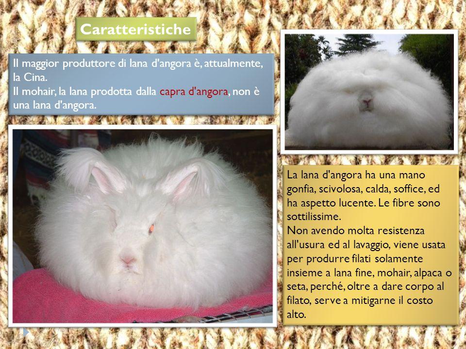  L'angora è un tipo di lana pregiata prodotta con il pelo del coniglio d'angora.  Questo coniglio, di corporatura grossa, è di colore bianco e coper