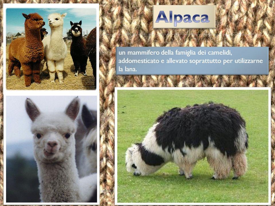  La lana d'angora ha una mano gonfia, scivolosa, calda, soffice, ed ha aspetto lucente.  Le fibre sono sottilissime.  Non avendo molta resistenza a