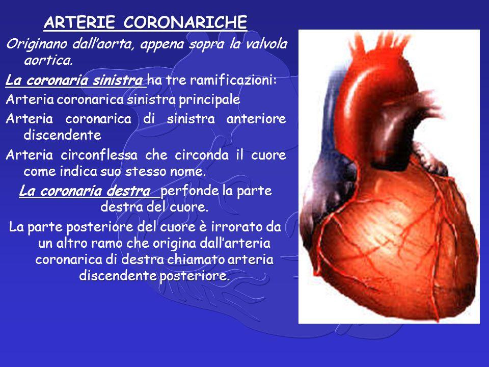 ARTERIE CORONARICHE Originano dall'aorta, appena sopra la valvola aortica.