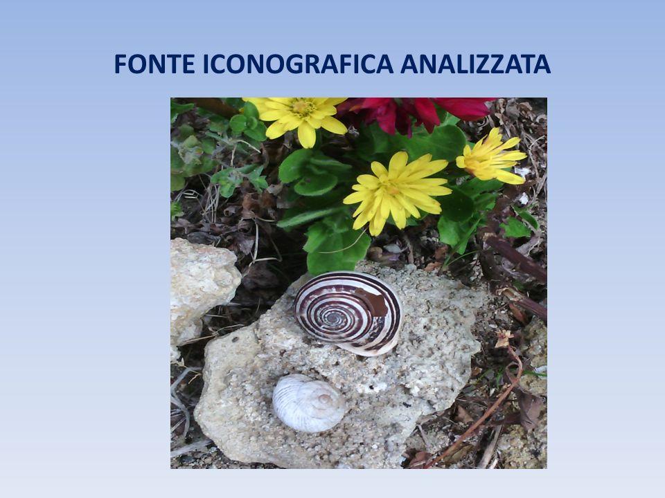 FONTE ICONOGRAFICA ANALIZZATA