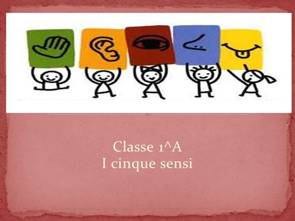Classe 1^A I cinque sensi
