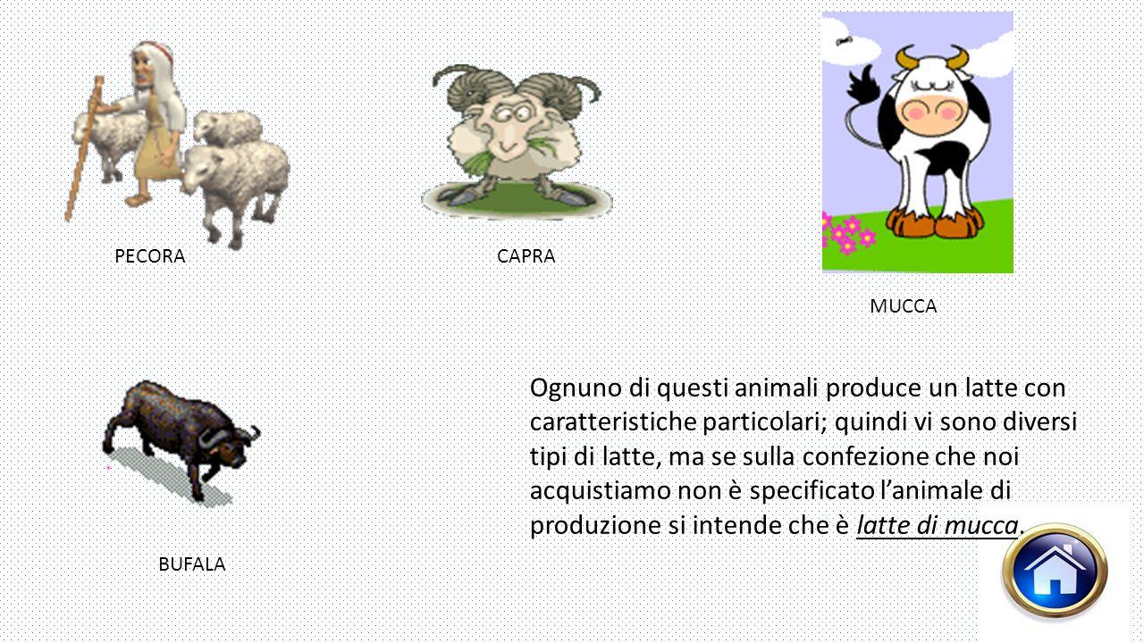 PECORA BUFALA MUCCA CAPRA Ognuno di questi animali produce un latte con caratteristiche particolari; quindi vi sono diversi tipi di latte, ma se sulla confezione che noi acquistiamo non è specificato l'animale di produzione si intende che è latte di mucca.