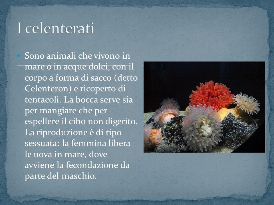 Sono animali che vivono in mare o in acque dolci, con il corpo a forma di sacco (detto Celenteron) e ricoperto di tentacoli.