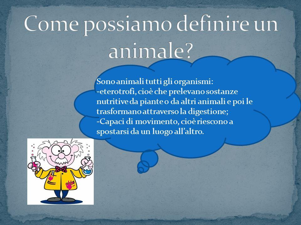 Sono animali tutti gli organismi: -eterotrofi, cioè che prelevano sostanze nutritive da piante o da altri animali e poi le trasformano attraverso la d