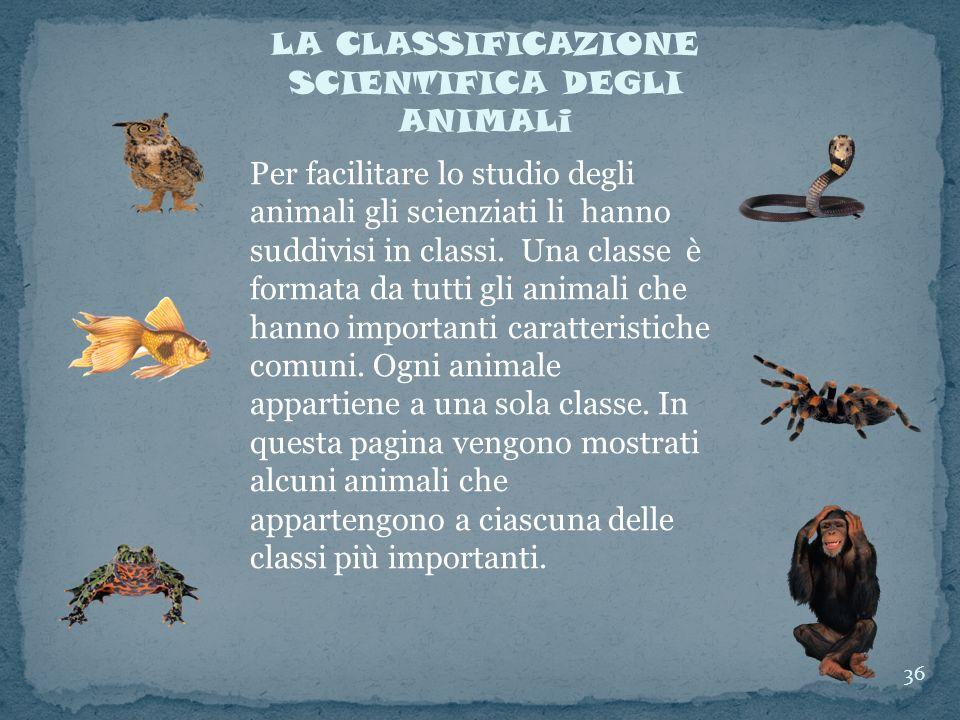 LA CLASSIFICAZIONE SCIENTIFICA DEGLI ANIMALi Per facilitare lo studio degli animali gli scienziati li hanno suddivisi in classi. Una classe è formata