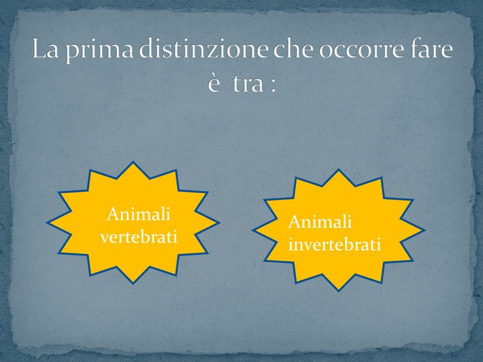 Animali vertebrati Animali invertebrati