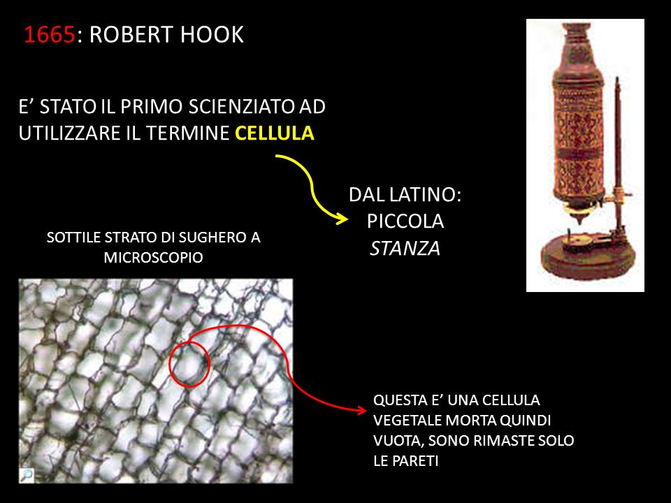 1665 1665: ROBERT HOOK E' STATO IL PRIMO SCIENZIATO AD UTILIZZARE IL TERMINE CELLULA DAL LATINO: PICCOLA STANZA SOTTILE STRATO DI SUGHERO A MICROSCOPIO QUESTA E' UNA CELLULA VEGETALE MORTA QUINDI VUOTA, SONO RIMASTE SOLO LE PARETI