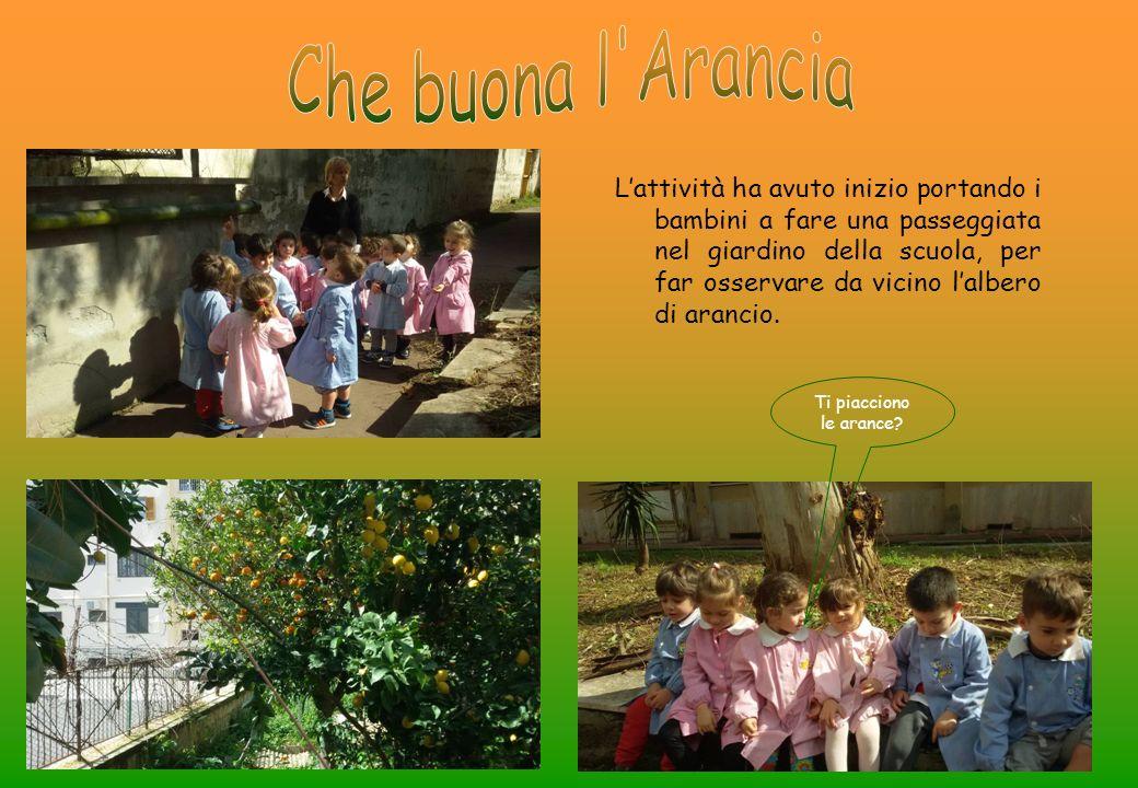 L'attività ha avuto inizio portando i bambini a fare una passeggiata nel giardino della scuola, per far osservare da vicino l'albero di arancio.