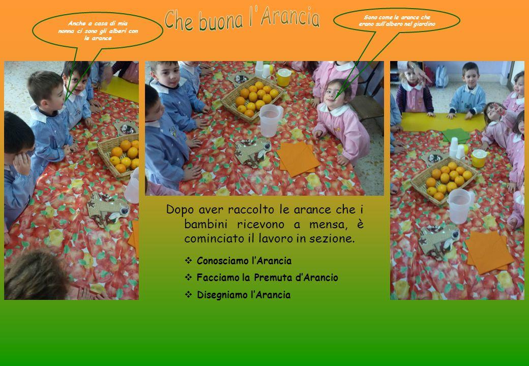 Sono come le arance che erano sull'albero nel giardino Anche a casa di mia nonna ci sono gli alberi con le arance Dopo aver raccolto le arance che i bambini ricevono a mensa, è cominciato il lavoro in sezione.